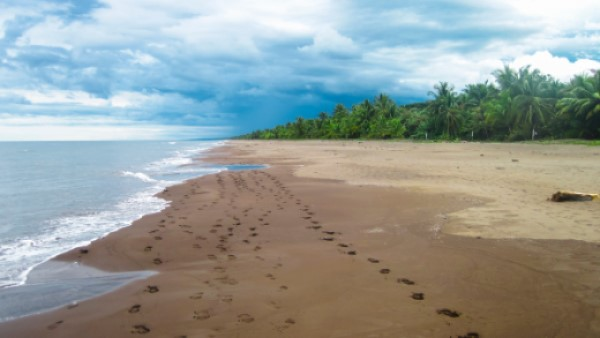 Caribbean Coastline of Northeast Costa Rica in Tortuguero National Park