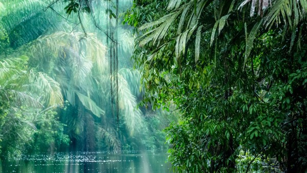 Rainforest at Tortuguera National Park, Costa Rica