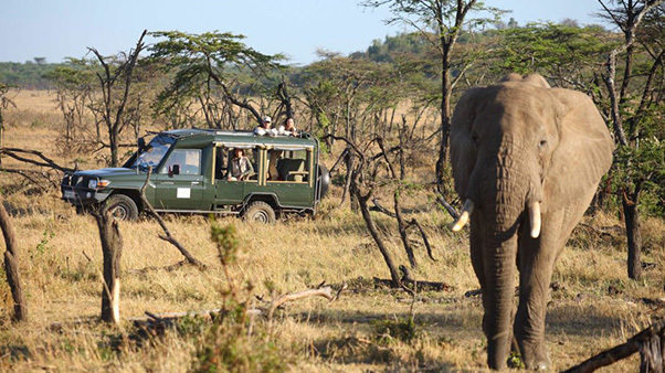 Viewing an elephant on safari