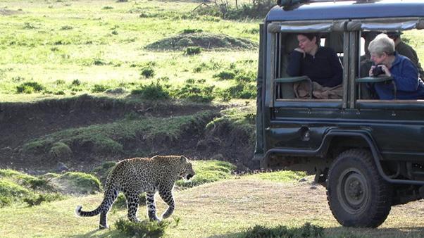 Big game viewing on safari