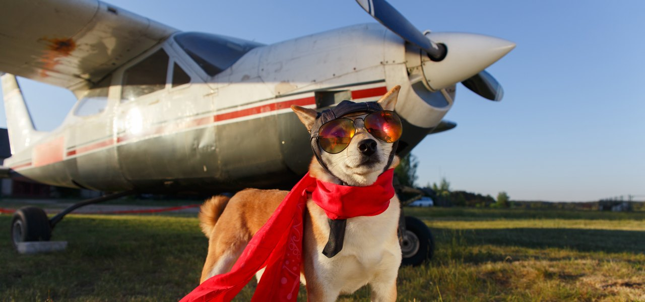 Small dog in red cape with aviator sunglasses standing in front of small aircraft