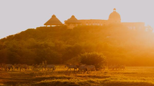 Zebra in front of Cuixmala.