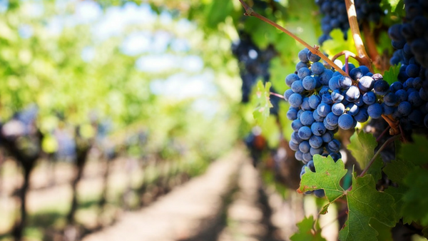 Luxury Destinations For Every Type - Napa Valley