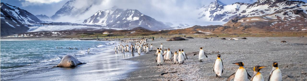 The rugged coastline of South Georgia Island, with a line of penguins waddling down the beach and snowy peaks behind – one of the world's most remote holiday destinations