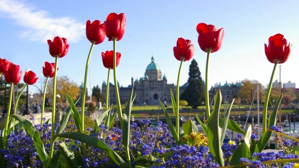 Victoria Legislature Downtown