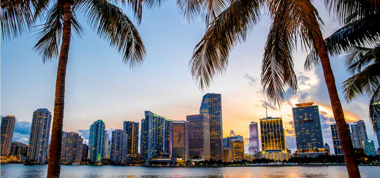 Miami city skyline behind two palm trees