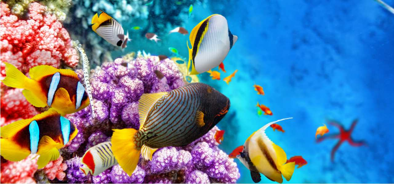 Beautiful underwater world with corals and tropical fish at the Great Barrier Reef, Australia