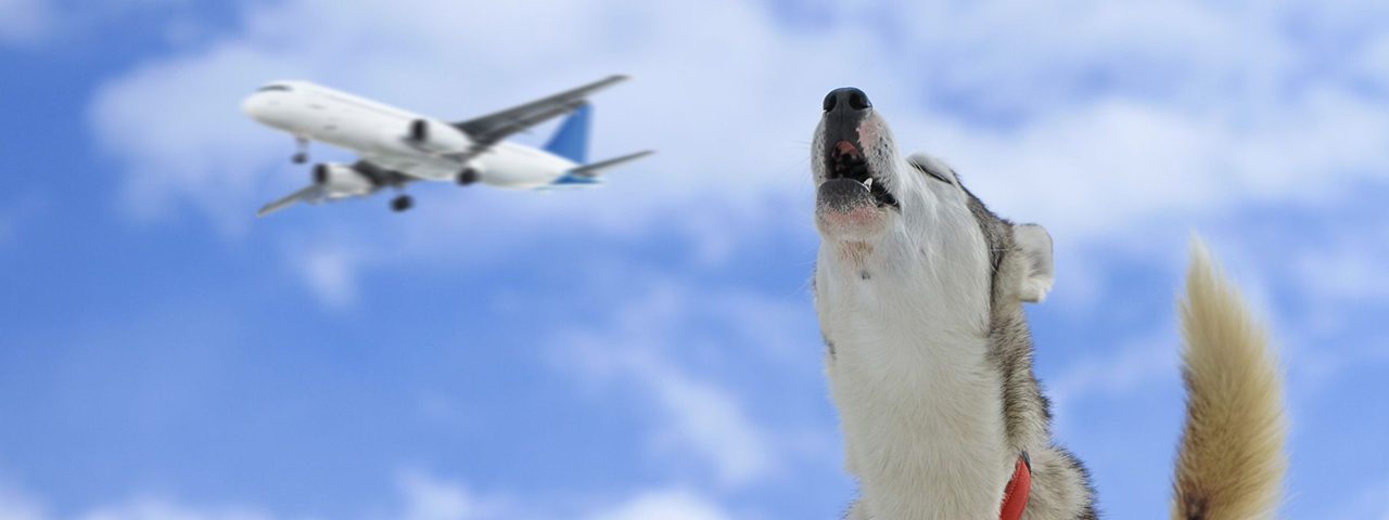 Dog and plane