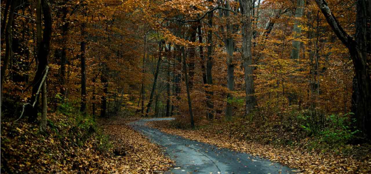 A narrow road winds through an autumn forest in Shreveport, Louisiana