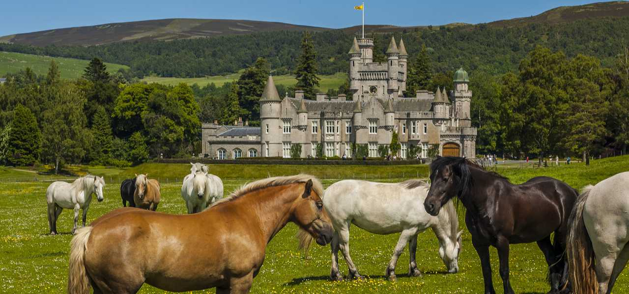 Horses in front of Balmoral Castle, Scotland