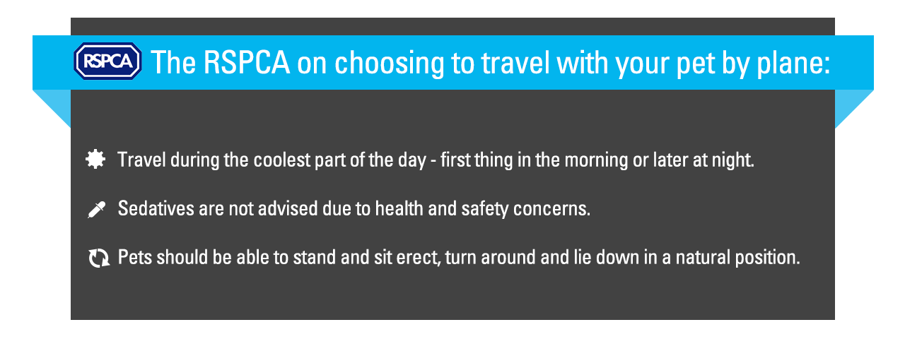 The RSPCA on choosing to travel with your pet by plane