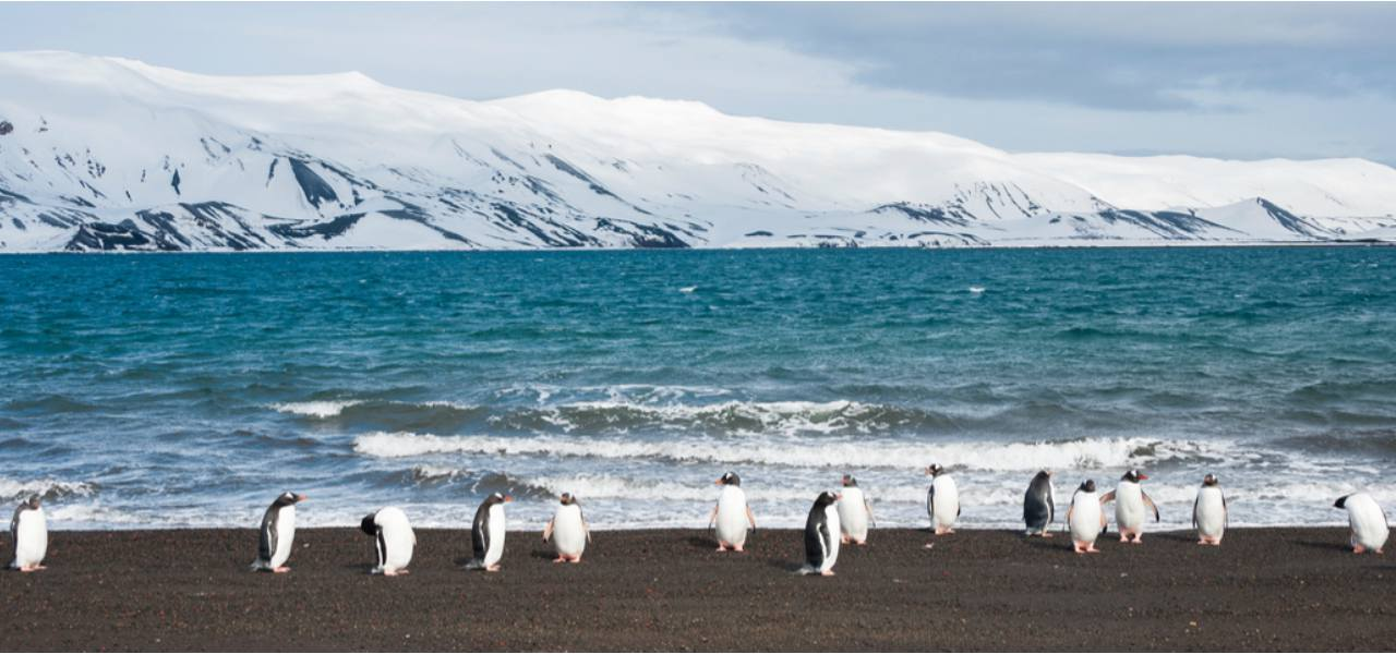 A line of penguins walking along the beach at Deception Island beach front