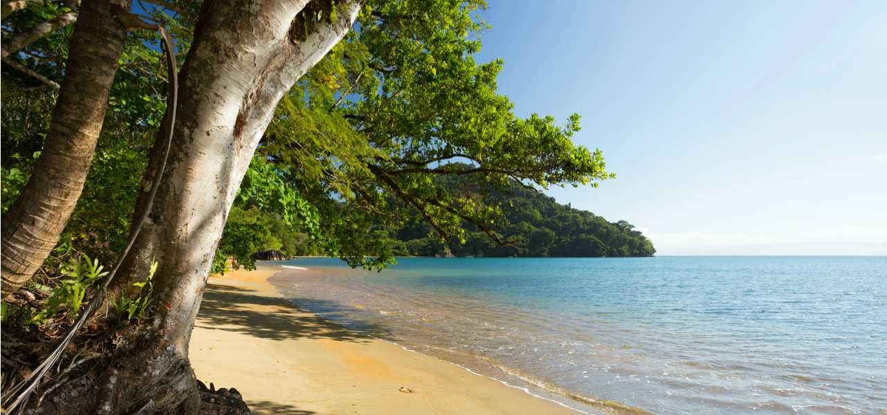 Madagascar beach lined with trees