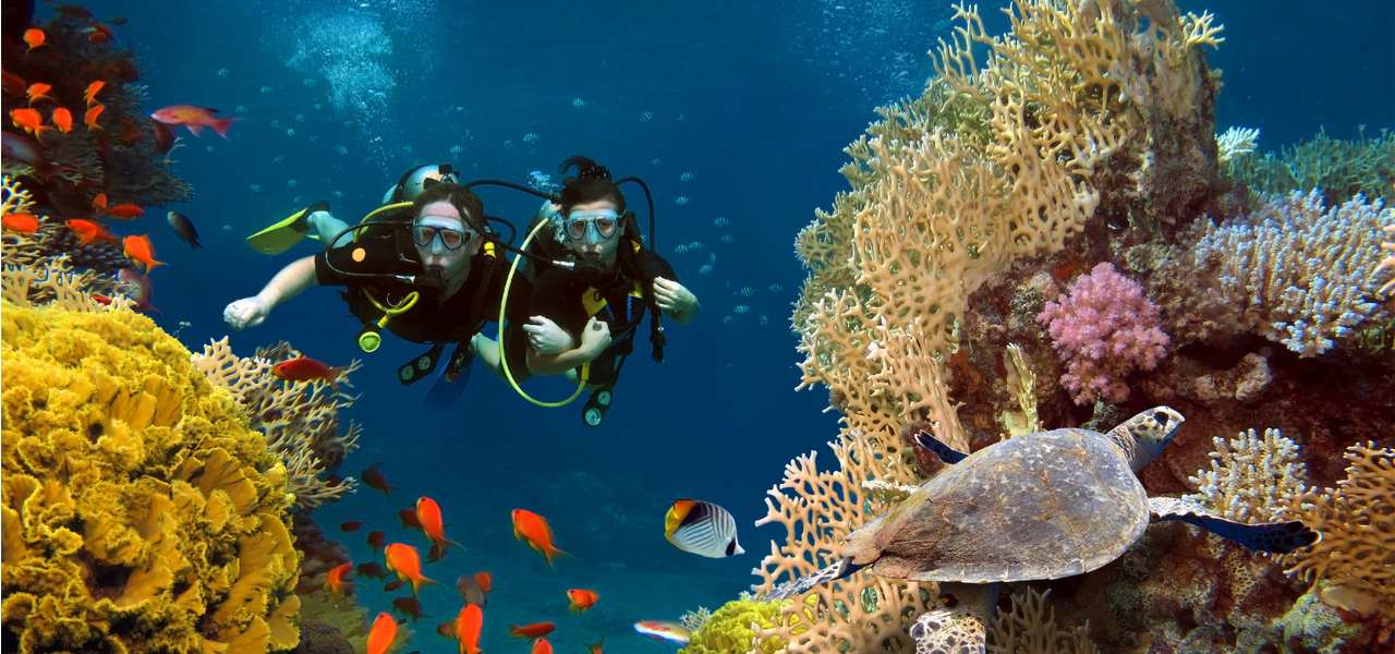 A couple SCUBA diving between coral reefs, with a sea turtle in the foreground