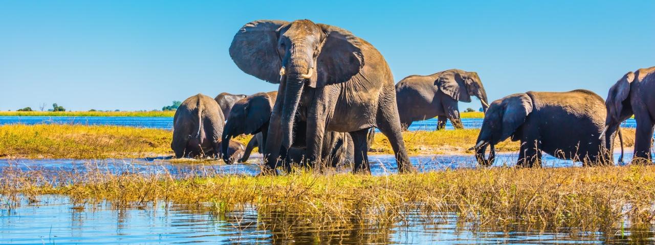 Private Jet Charter to Okavango Delta