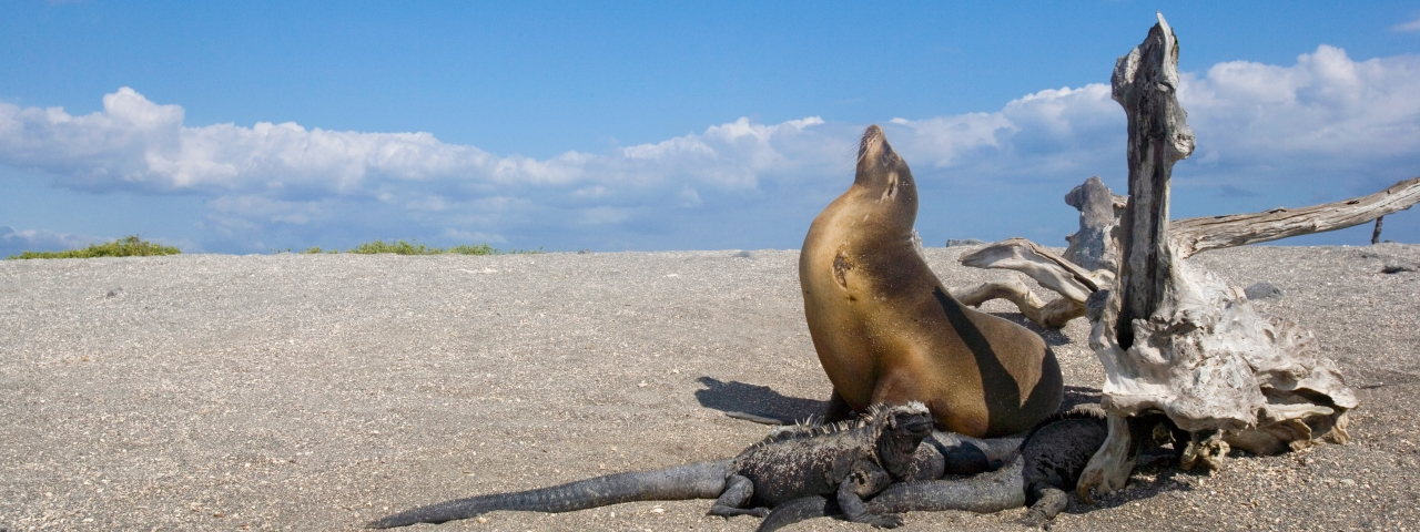 Private Jet Charter to Galapagos Islands